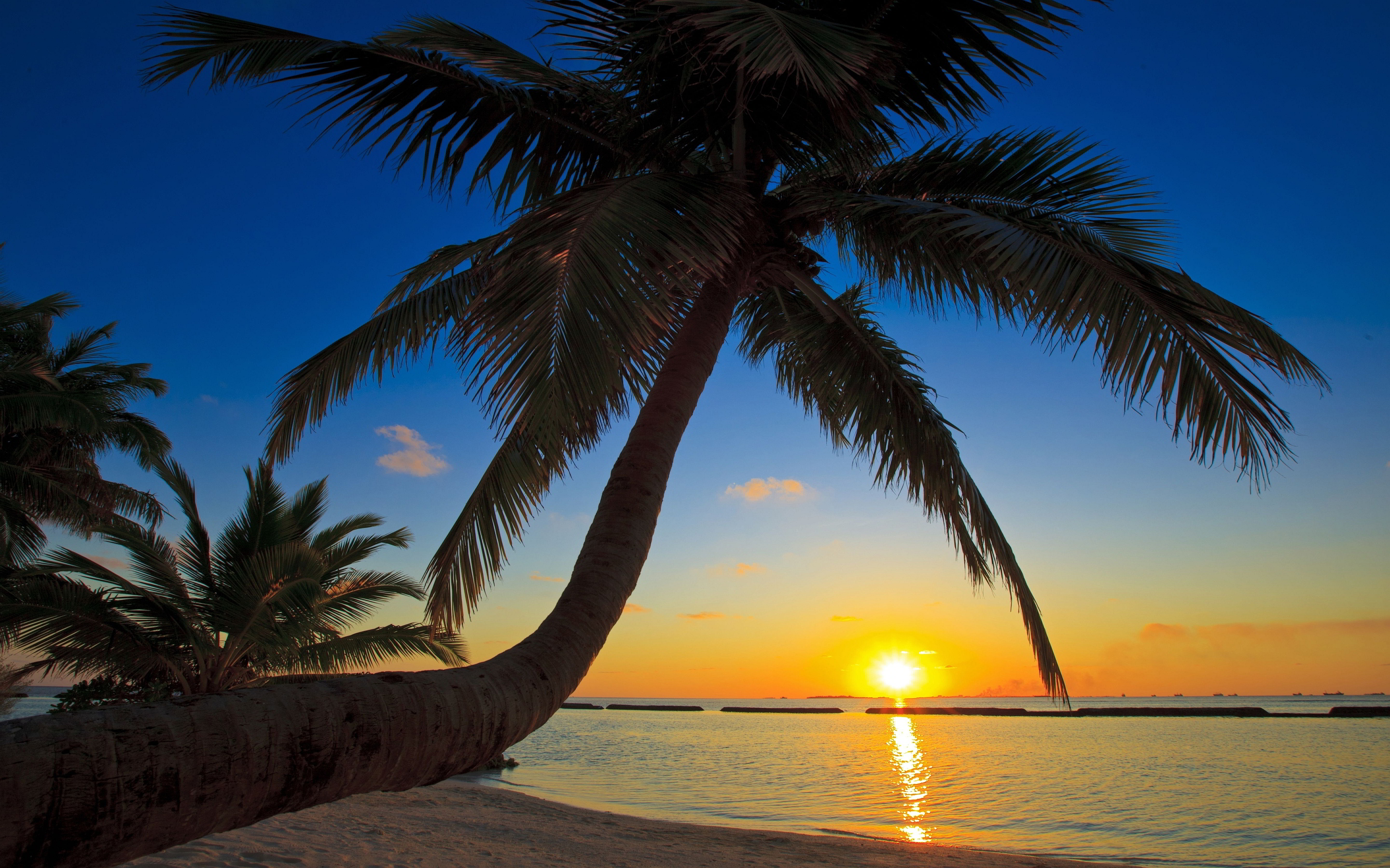 Sunset-Beach-with-coco-palm