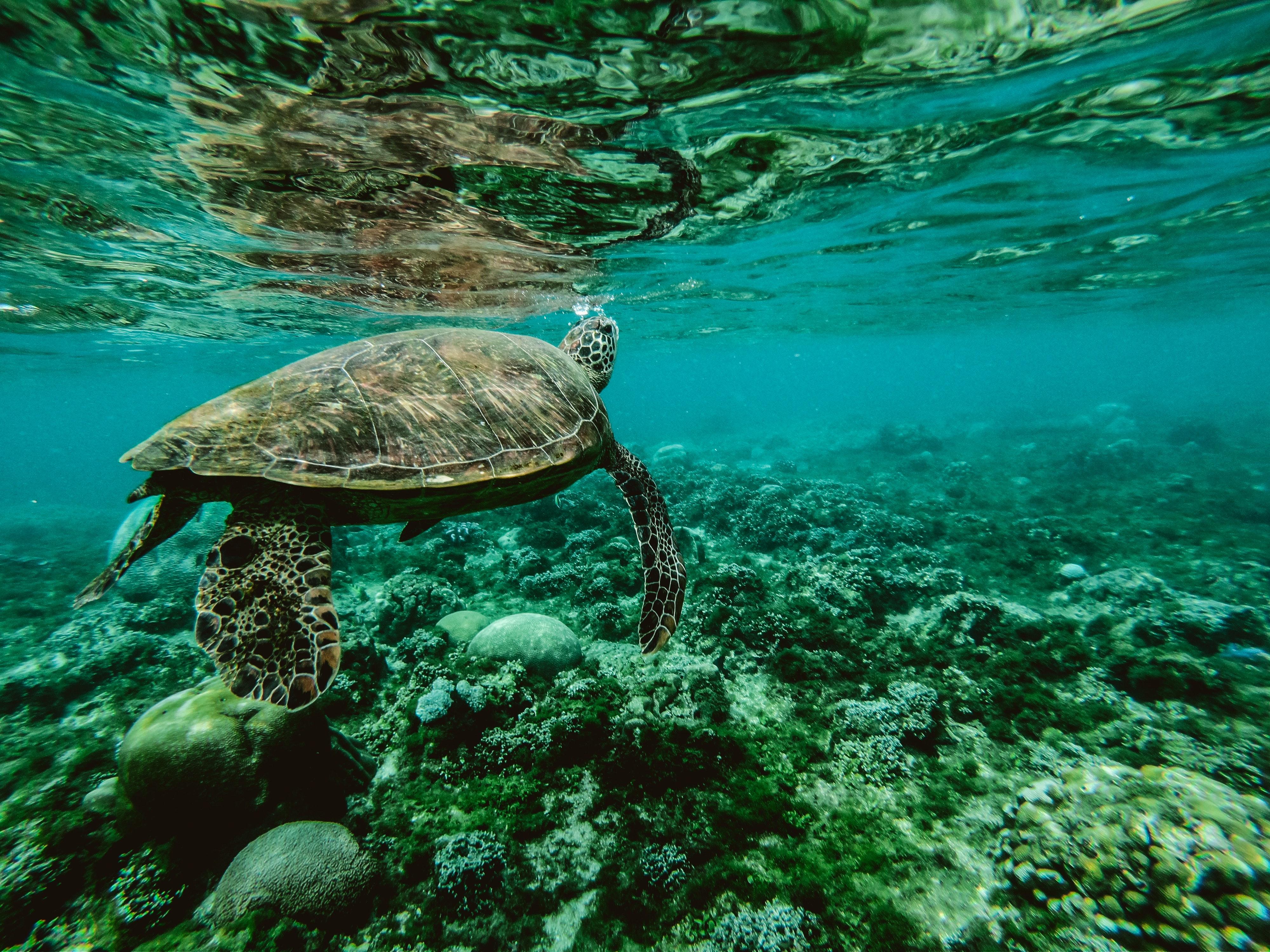 animal-aquatic-corals-847393